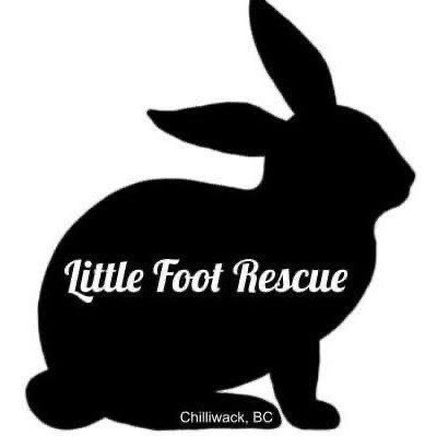 Little Foot Rescue Logo